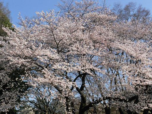 世田谷美術館の春:4月 6日_f0172744_22271614.jpg