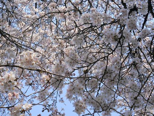 世田谷美術館の春:4月 6日_f0172744_22273117.jpg