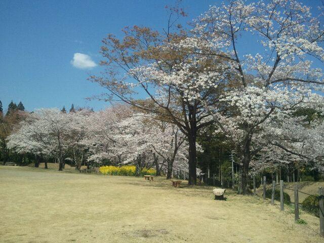 宮崎のお花見スポット_a0072251_1617201.jpg
