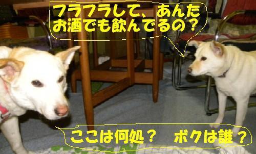 b0201756_2231317.jpg