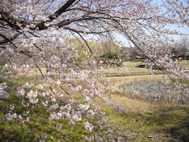 春爛漫!!_d0116059_21281470.jpg