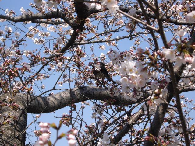 春爛漫!!_d0116059_21295427.jpg