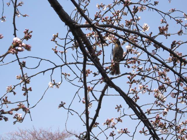 春爛漫!!_d0116059_21325965.jpg