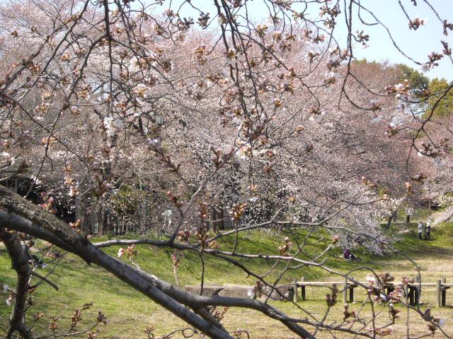 春爛漫!!_d0116059_21344363.jpg