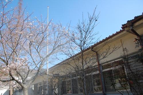 平成23年4月度「大人の林間学校」:琴演奏と理智院の桜_c0108460_20363594.jpg