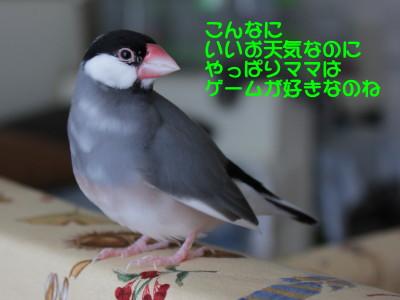 b0158061_21474864.jpg