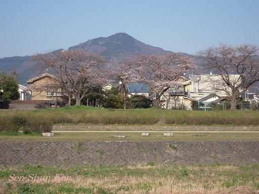 賀茂川の桜_a0164068_23362597.jpg