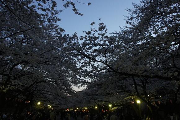 上野の山の見事な桜たち!_c0180686_0593182.jpg