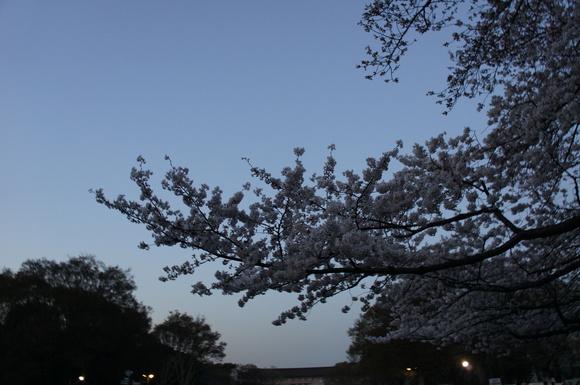上野の山の見事な桜たち!_c0180686_105537.jpg