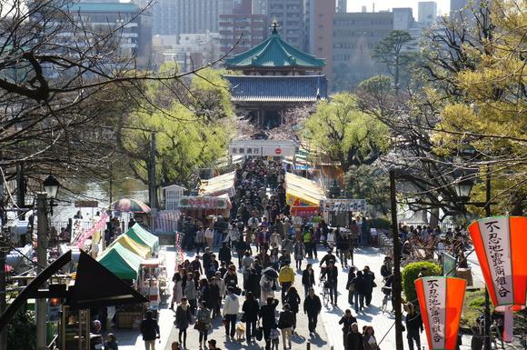 上野の山の見事な桜たち!_c0180686_1141016.jpg