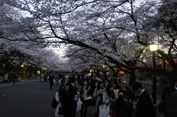 上野の山の見事な桜たち!_c0180686_124053.jpg