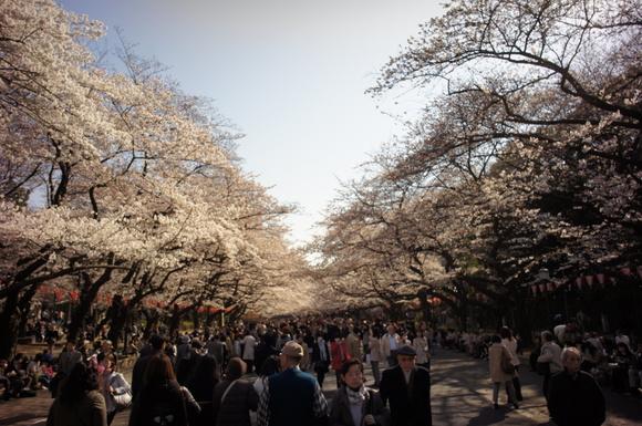上野の山の見事な桜たち!_c0180686_1241051.jpg