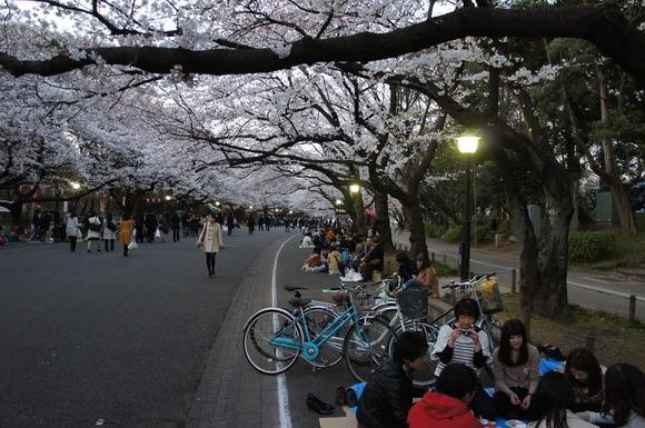 上野の山の見事な桜たち!_c0180686_14768.jpg