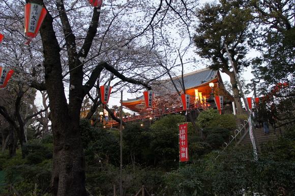 上野の山の見事な桜たち!_c0180686_16783.jpg