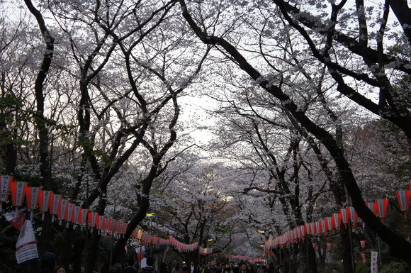 上野の山の見事な桜たち!_c0180686_18244.jpg