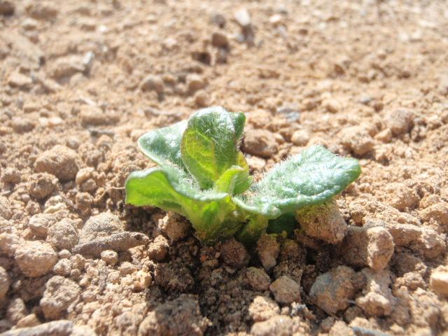 やっと芽がでました♪♪_b0201492_956244.jpg
