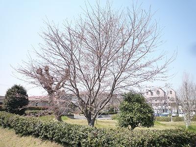 春 間近。。_c0184994_1314273.jpg