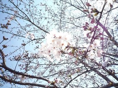 春 間近。。_c0184994_1315477.jpg