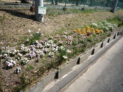 春 間近。。_c0184994_13173641.jpg