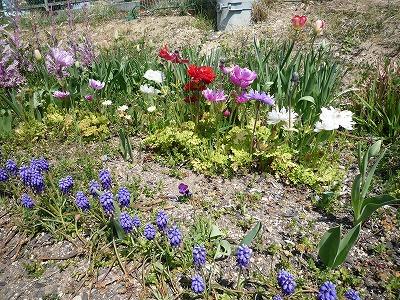 春 間近。。_c0184994_13175297.jpg