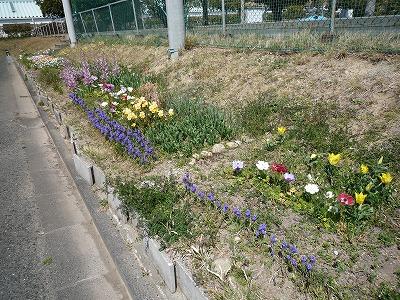 春 間近。。_c0184994_13181075.jpg