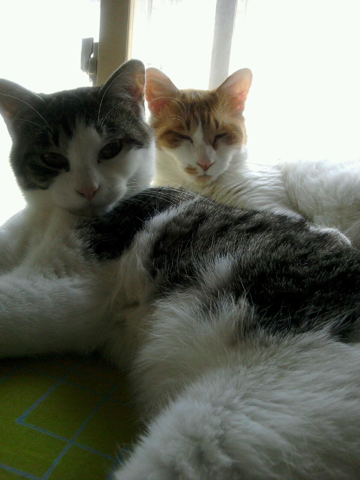 まどろむ猫たち_d0122797_216413.jpg
