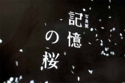『記憶の桜』 _b0060102_13534932.jpg