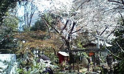 配偶者様への贈与の首の鈴、そして愛宕山の桜_d0054704_23453821.jpg