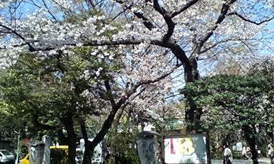配偶者様への贈与の首の鈴、そして愛宕山の桜_d0054704_2346681.jpg