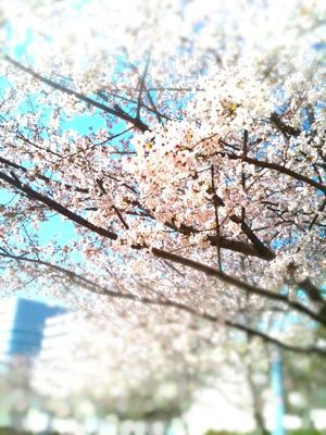 春本番やね_e0050006_9444725.jpg