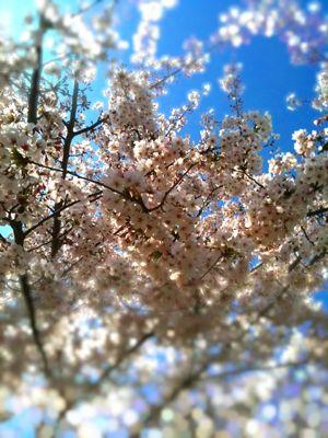 春本番やね_e0050006_9444959.jpg