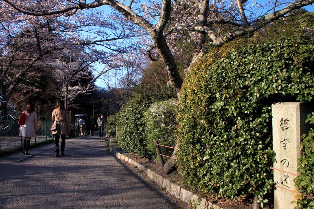 京の花だより 哲学の道_e0048413_20161854.jpg