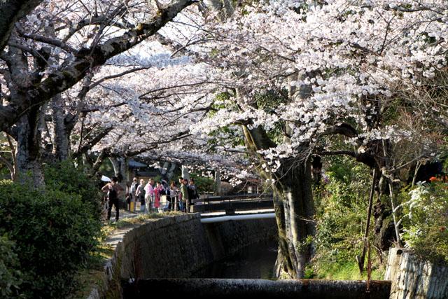 京の花だより 哲学の道_e0048413_20164990.jpg