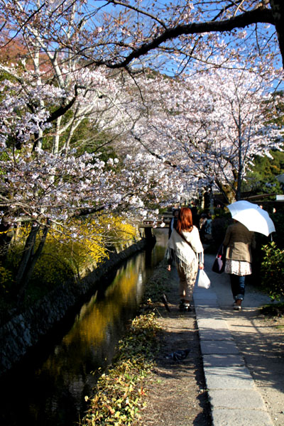 京の花だより 哲学の道_e0048413_20171552.jpg