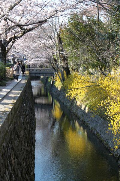 京の花だより 哲学の道_e0048413_2017270.jpg