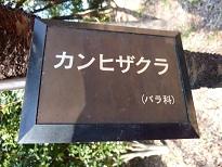 花見 その1 桜と桃_a0177314_19151353.jpg