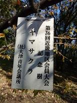 花見 その1 桜と桃_a0177314_19155980.jpg