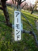 花見 その1 桜と桃_a0177314_19222499.jpg
