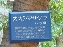 花見 その1 桜と桃_a0177314_19245321.jpg