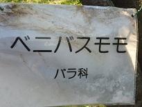 花見 その1 桜と桃_a0177314_2044824.jpg