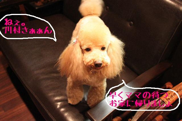 桜!!_b0130018_10123539.jpg