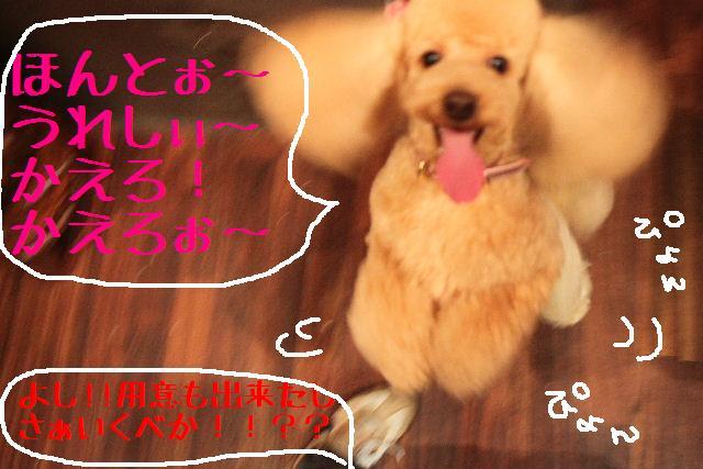 桜!!_b0130018_10123854.jpg