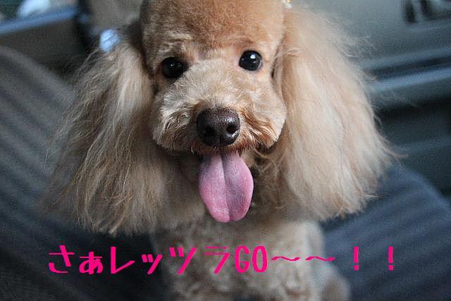 桜!!_b0130018_10124336.jpg