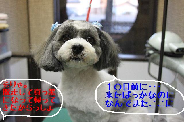 桜!!_b0130018_10134755.jpg