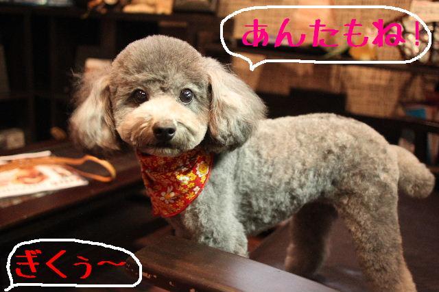桜!!_b0130018_10163280.jpg