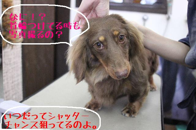桜!!_b0130018_10172289.jpg