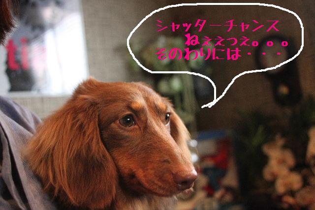 桜!!_b0130018_10174673.jpg