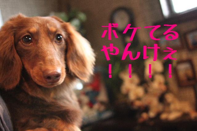 桜!!_b0130018_10175173.jpg