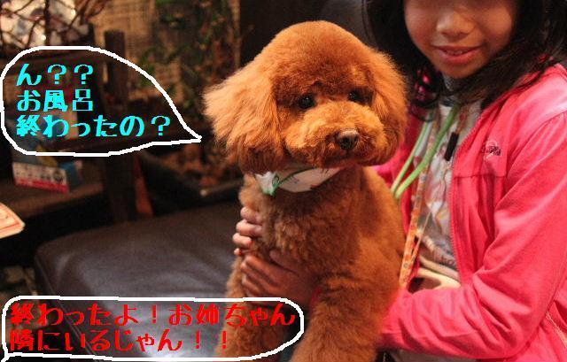桜!!_b0130018_10192212.jpg