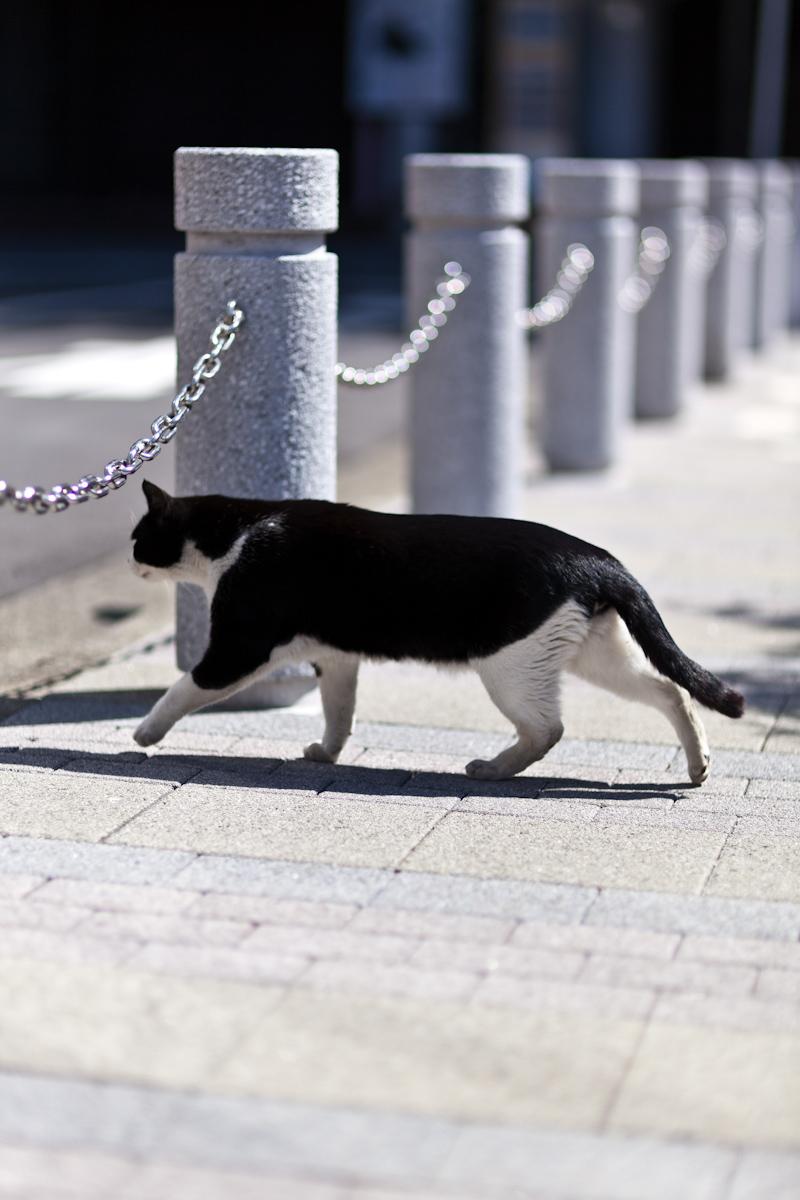 猫_b0213320_2301849.jpg